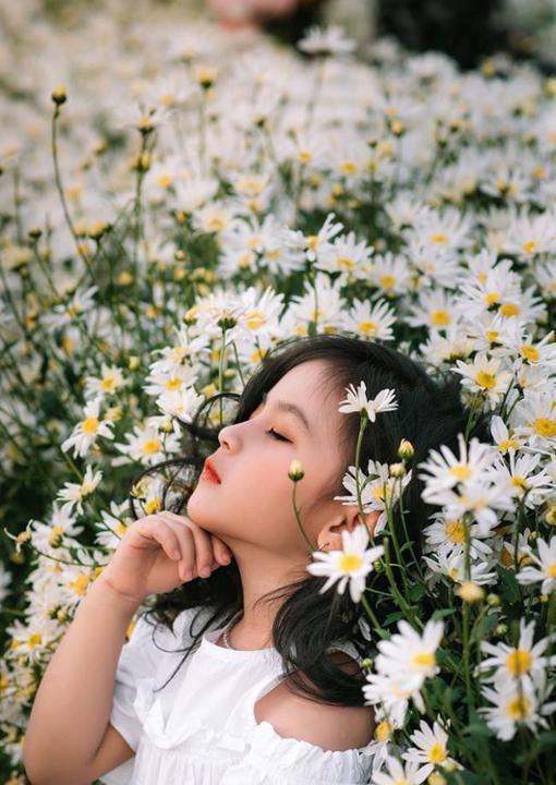 Ý nghĩa hoa cúc họa mi vẻ đẹp trong veo thánh thiện